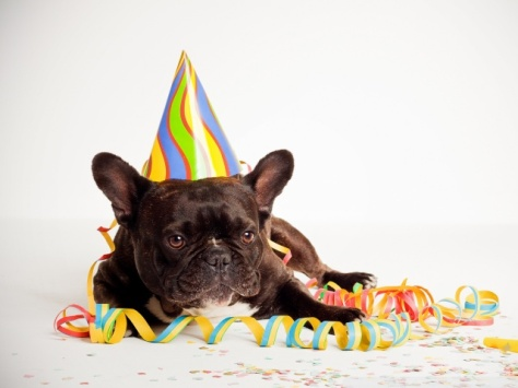 happy_birthday_dog-wallpaper-640x480